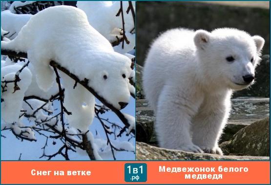 Белый зверёк похожий на медведя